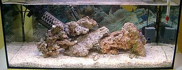 richtiger besatz im aquarium